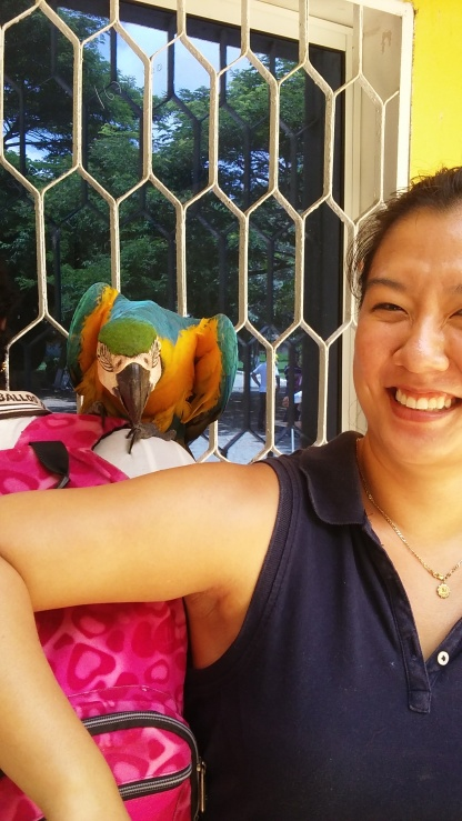 As you can see, parrot is not on my arm. It really wanted to bite me.